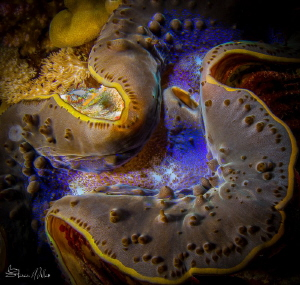 S-Curves.. Clams are nice subjects to work with compared ... by Steven Miller